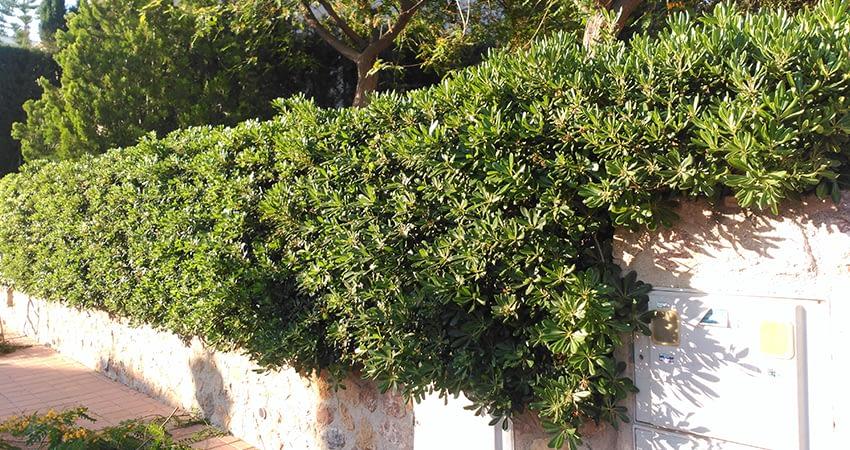 Jardineria-Murcia